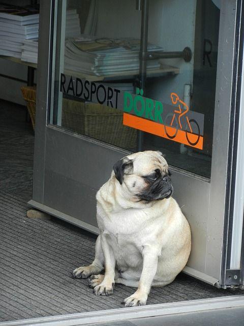 Promocionar tienda de animales